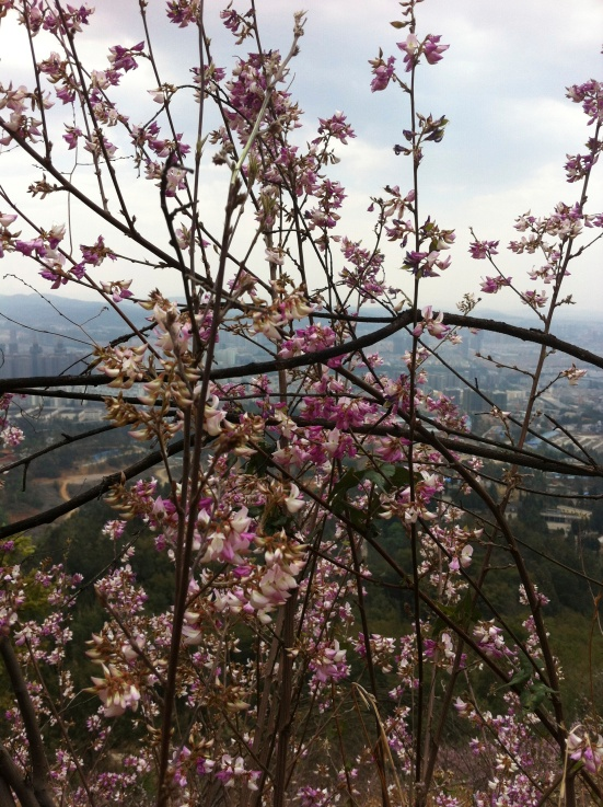 Pretty flowers and Kunming down below